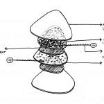 Capteur textile à variable